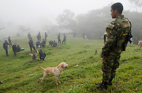 Colombian soldiers and anti-explosive dogs stand guard while they clean the area of explosive devices placed by guerrilla groups and criminal gangs. during a coca plant eradication program at the Antioquia mountains In Colombia so far this year have been eradicated 900 hectares in the country, mainly in rural areas, there are about 2,500 men engaged in this work. According to the Presidential Program for Comprehensive Action against Antipersonnel Mines, between 1990 and January 31, 2012, have been affected by landmines l9.642 people, of these, 674 were injured in eradication. Medellín, July 3 of 2012. Photo by Fredy Amariles/ VIEWpress.