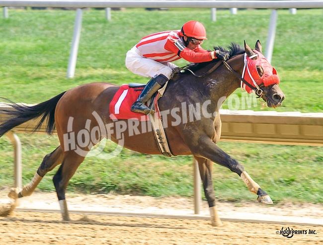Majestic Hope winning at Delaware Park on 9/8/16