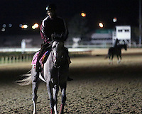 LOUISVILLE, KY - APRIL 04: Lani, UAE Derby winner from Japan, trains at Churchill Downs (Louisville, KY) for the 148th Kentucky Derby. (Photo by Mary M. Meek/Eclipse Sportswire/Getty Images)