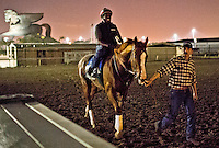 HALLANDALE BEACH, FL - JAN 27: California Chrome, with exercise rider Dihigi Gladney walks off the the track  after finishing his final preparations for the Pegasus World Cup at Gulfstream Park Race Course on January 27, 2017 in Hallandale Beach, Florida. (Photo by Scott Serio/Eclipse Sportswire/Getty Images)