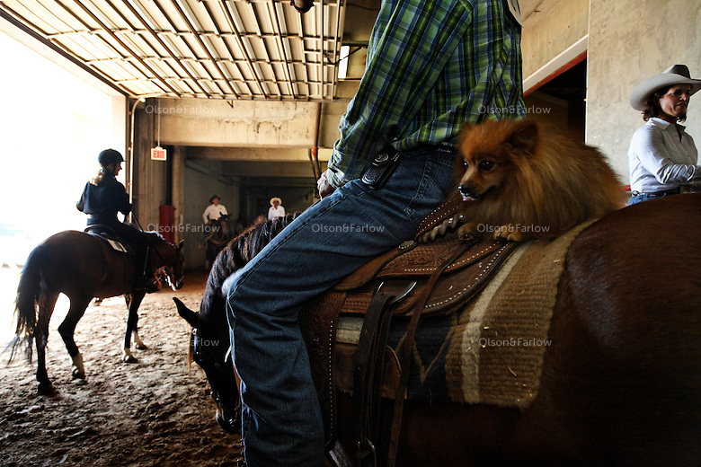 A dog sits on the back of a horse at the Extreme Mustang Makeover which featured100 Trainers, 100 Mustangs, 100 Days  for a competition that awarded a $25,000 prize to the winner.  Mustang Heritage Foundation and the Bureau of Land Management created the competition to raise awareness of the value of mustangs, and to showcase the beauty, versatility, and trainability of these rugged horses.  <br /> The second highest adopting horse was a Calico Mountain Mustang named Larry, trained by Dave Schaffner. Schaffner tragically suffered a serious riding accident on another horse shortly before the competition and was not able to compete. As a result, Larry was shown by Shaffner's son Tyler and the family dog. The horse was adopted for $10,000 by Mustangs Forever Inc.'s Randy Olson of Kerrville, Texas who was also the high-money adopter purchasing two horses for a total of $13,100. The after fee funds received for Larry will be donated to the Schaffner family to assist with medical bills.<br /> In an amazing display of horsemanship that included cracking whips, shooting balloons and a chain saw, 12 trainers faced off in the finals. Veteran cutting horse trainer Guy Woods won the event on Max. .An adoption followed the event where one horse brought $58,000 and could have been bought for $125 from the BLM.  The 75 mustangs that made it through the event were adopted for a total of $233,100.