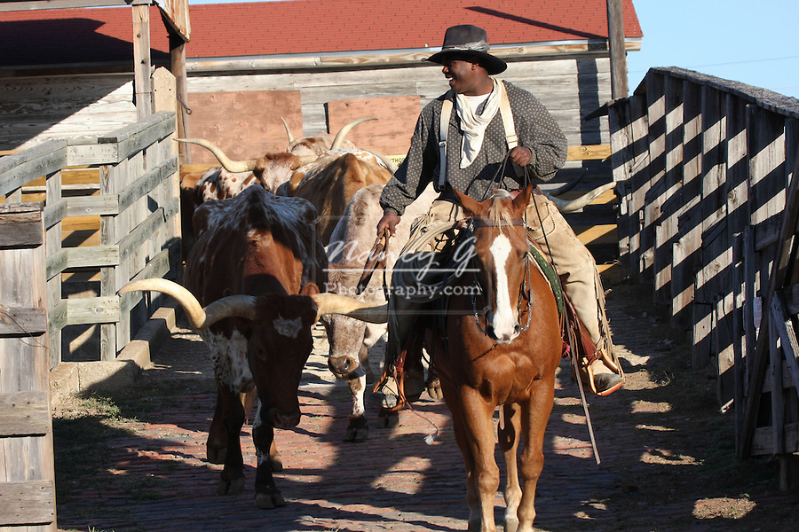 An African American Cowboy Driving The Texas Longhorn Cattle Drive At The Stockyards In Fort Worth Texas Nancy Greifenhagen