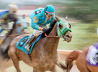 CHARLES TOWN, WV - APRIL 22: March Wind #9, ridden by Oscar Flores, fights through mud and slop early in the Original Gold Stakes on Charles Town Classic Day at Charles Town Races and Slots on April 22, 2017 in Charles Town, West Virginia (Photo by Scott Serio/Eclipse Sportswire/Getty Images)