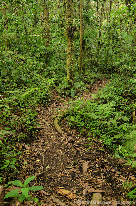 The Cano Negro Trail, Santa Elena Cloud Forest Reserve, Costa Rica
