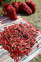 Chilis being prepared for drying. Kalocsa, Hungary