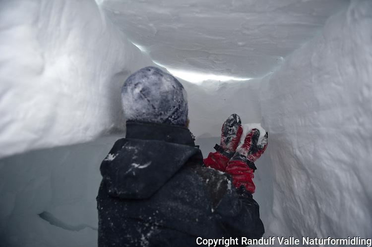 Mann tetter taket på kantgrop med snø. ---- Man putting roof on a snow bivouac.