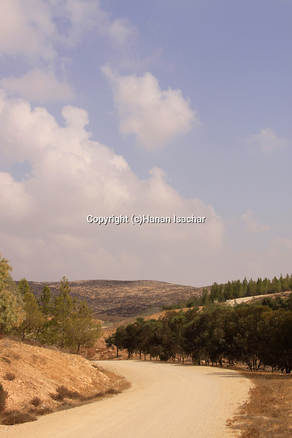 Israel, Southern Hebron Mountain, Yatir Forest Scenic Route .