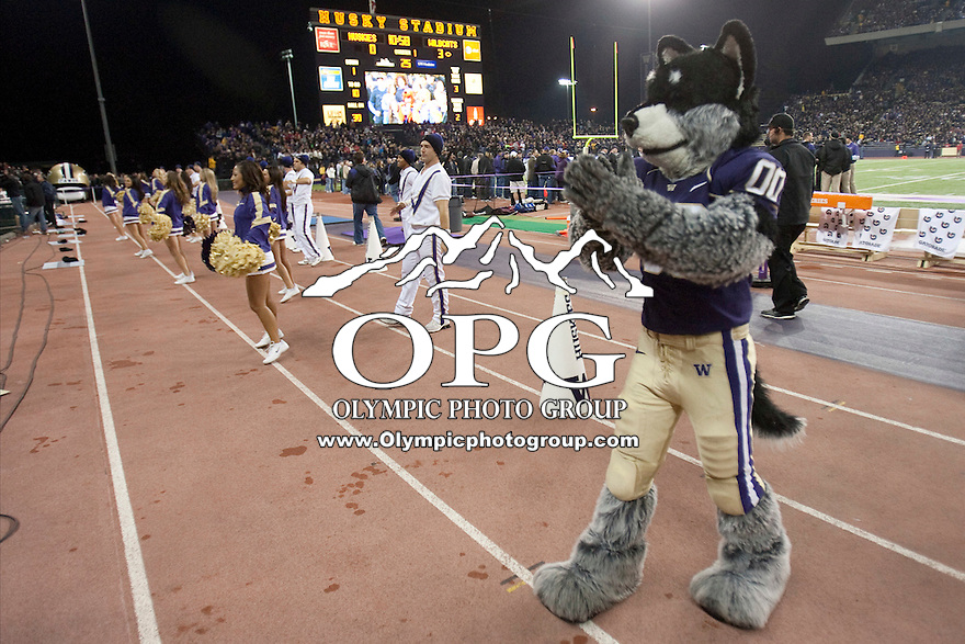 Oct 29, 2011:  Washington Husky mascot Harry against Arizona.  Washington defeated Arizona 42-31 at Husky Stadium in Seattle, Washington...
