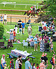 The paddock at Delaware Park on 5/16/15