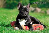 Marek, ANIMALS, REALISTISCHE TIERE, ANIMALES REALISTICOS, dogs, photos+++++,PLMP3271,#a#, EVERYDAY
