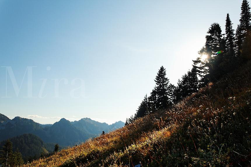 Subalpine meadow, Paradise Meadows, Mount Rainier National Park, Washington, USA