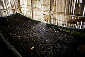 A worker sprays water to moist the compost at the Makaibari Tea estate, in Darjeeling, India.