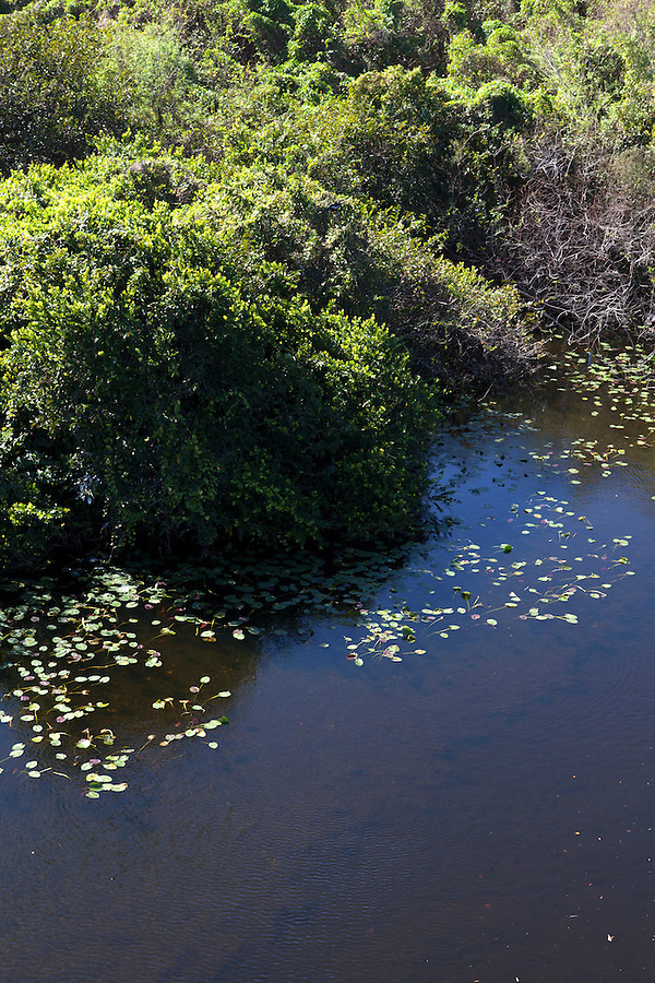 View from above of the Shark Valley area, Everglades National Park, Florida, USA