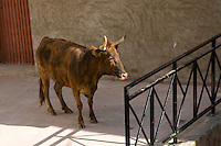 En el Toro