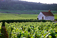 Chambertin Clos de Beze Grand Cru vineyard with the name painted on a small farm house, owned by Pierre Damoy
