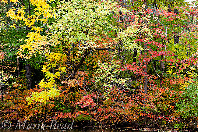 Fall colors at Strawberry Pond, North Chagrin Reservation, Ohio, USA.