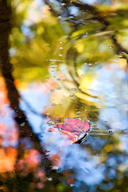 water, leaf, autumn, fall, Acadia National Park, Maine, abstract