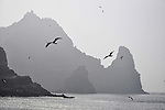 Seagulls fly around the steep cliffs of one of the Dokdo Islands, known to Japanese as Takeshima, sovereignty over which is disputed between Japan and South Korea, in the Sea of Japan on 22 June 2010..Photographer: Robert Gilhooly.