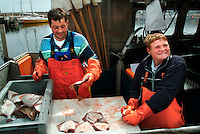 Commercial Fishermen Cleaning Flounder, Svaneke, Bornholm Island, Denmark, Baltic Sea