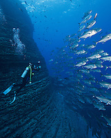 RM0194-D. Bigeye Jacks (Caranx sexfasciatus), schooling alongside pinnacle of famous dive site &ldquo;The Boiler&rdquo; at San Benedicto Island in the Revillagigedo Islands. Baja, Mexico, Pacific Ocean.<br /> Photo Copyright &copy; Brandon Cole. All rights reserved worldwide.  www.brandoncole.com