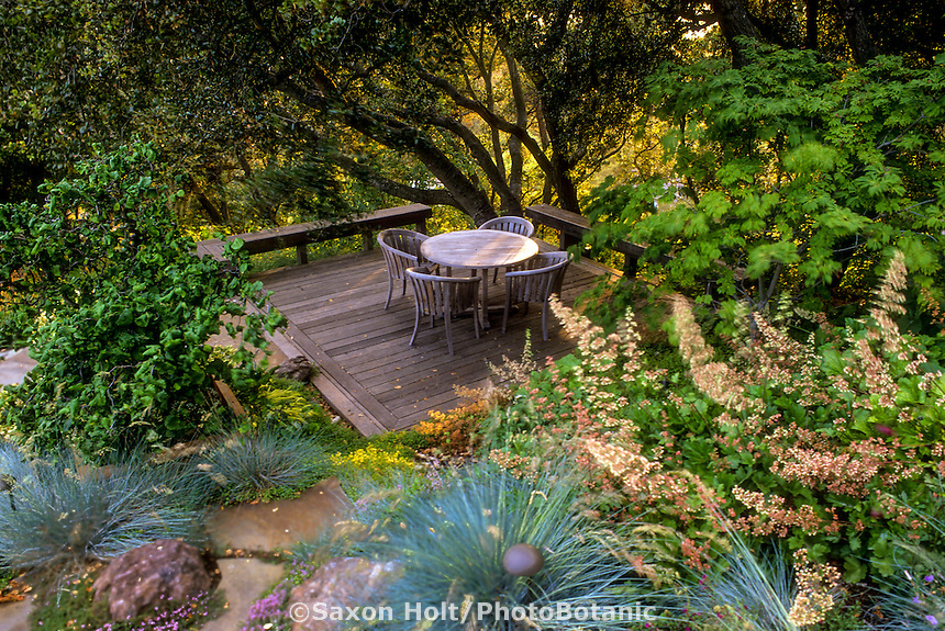 California sustainable garden room deck with Quercus agrifolia (Coast Live Oak tree), Heuchera, Blue Fescue grass, and Vine Maple tree