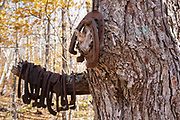 Hikers have hung horseshoes, protected artifacts, in a tree at logging Camp 7 of the abandoned Beebe River Railroad (1917-1942) in Sandwich, New Hampshire. Artifacts, such as these horseshoes, are protected, and the removal of historical artifacts from federal lands without a permit is a violation of federal law.