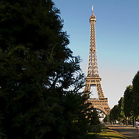 Eiffel Tower behind evergreen tree.  Paris. Shot from Champs de Mars.  Back of morning jogger visible in lower right.  Clear, cloudless morning sky