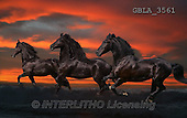Bob, ANIMALS, REALISTISCHE TIERE, ANIMALES REALISTICOS, collage, horses, photos+++++,GBLA3561,#a#