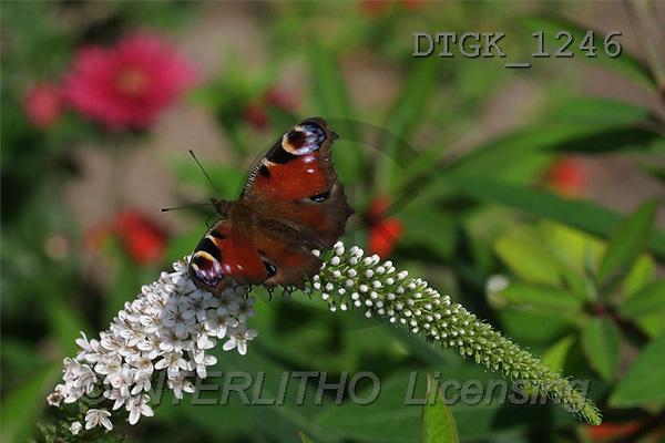 Gisela, FLOWERS, photos(DTGK1246,#F#) Blumen, flores, retrato