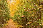 Fall foliage at Zealand, White Mountain National Forest, New Hampshire, USA