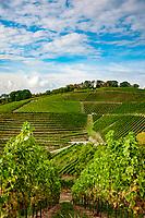 Deutschland, Baden-Wuerttemberg, Offenburg - Stadtteil Zell-Weierbach (Weinort im Ortenaukreis) - Weinberg | Germany, Baden-Wurttemberg, Offenburg - district Zell-Weierbach (wine village at Ortenau district) - vineyard