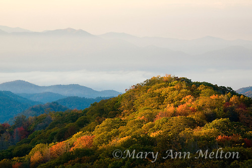 Foggy morning with sun light on fall trees at Great Smoky Mountains National Park