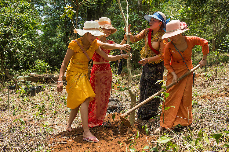Members of the Dai ethnic minority replant an area of forest on a hill that is considered as a holy site at Mangyangguan, Xishuangbanna, China. This project is supported by the BGCI and has been studied by XTBG for over 30 years. The site is considered to be holy as approximatley 370 years ago a highly respected doctor was reputed to have died against the only large stone in the forest. It has since become a place of prayer for the local buddhist population.