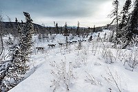 Jodi Bailey on the trail between Takotna and the Ophir Checkpoint on Thursday March 10 during Iditarod 2016.  Alaska.    <br /> <br /> Photo by Jeff Schultz (C) 2016  ALL RIGHTS RESERVED