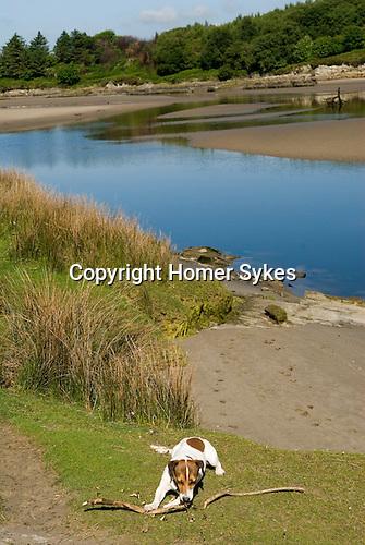 Brendan. River Dwyryd Estuary. Gwynedd North Wales UK. 2010