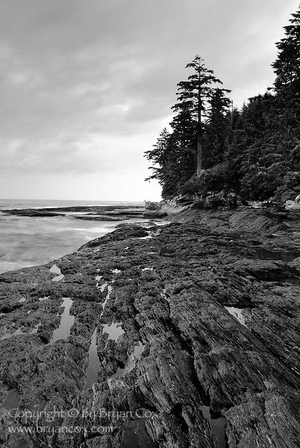 Shoreline, Botany Bay, Vancouver Island, BC