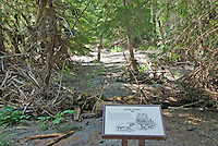 Winter elk habitat damaged under feet of silt from November 2006 Floods at Grove of the Patriarchs, Mount Rainier National Park, Washington State