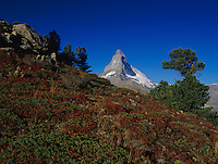 Matterhorn and fall colors, Zermatt, Swiss Alps, Switzerland