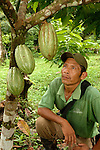 A Mayan cacao farmer examining his tree in a rainforest in southern Belize.  Southern Belize  is the heartland of traditional Mayan cacao production.  Local farmers sell their organic, rainforest-grown cacao at premium prices to Cadburys.  Cacao is one of the few cash crops in the poor region. Belize cacao  becomes the main ingredient in Cadbury's premium chocolate bar, Mayan Gold.