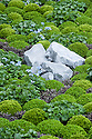 "Clipped mounds of Baby gunnera (Gunnera magellanica) and Mind-your-own-business (Soleirolia soleirolii syn. Helxine soleirolii) interplanted with Forget-Me-Nots (Myosotis sylvatica). The Sentebale Forget-Me-Not Garden,  designed by Jinny Blom, Silver Gilt medal winner, RHS Chelsea Flower Show 2013. Inspired by Prince Harry's charity Sentebale, which means ""Forget Me Not"" in Sesotho, the language spoken in Lesotho."