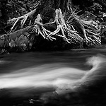 Detail of moving water and tree roots, Pyramid Creek, South Tahoe.