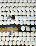 Pictured:  Workers move among hundreds of large bamboo bowls filled with white semolina.<br /> <br /> They spread the dry, coarse wheat product over the bamboo dishes and leave them to dry in the sun.<br /> <br /> By moving their hands through the semolina, they create beautiful circular patterns which only become apparent when viewed from above.<br /> <br /> Camera specialist Mr Luong Nguyen Anh Trung took the spectacular images in Tay Ninh Province, Vietnam.  SEE OUR COPY FOR FULL DETAILS.<br /> <br /> Please byline: Trung Anh/Solent News<br /> <br /> ©  Trung Anh/Solent News & Photo Agency<br /> UK +44 (0) 2380 458800