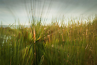 Grass and cattails in stationary motion through in-camera manipulation.  Coyote HIlls Regional Park along San Francisco Bay.