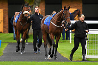 Runners in the first race enter the parade ring during Bathwick Tyres Reduced Admission Race Day at Salisbury Racecourse on 9th October 2017