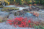 NATURAL ROCK GARDENS IN AND AROUND YELLOWKNIFE