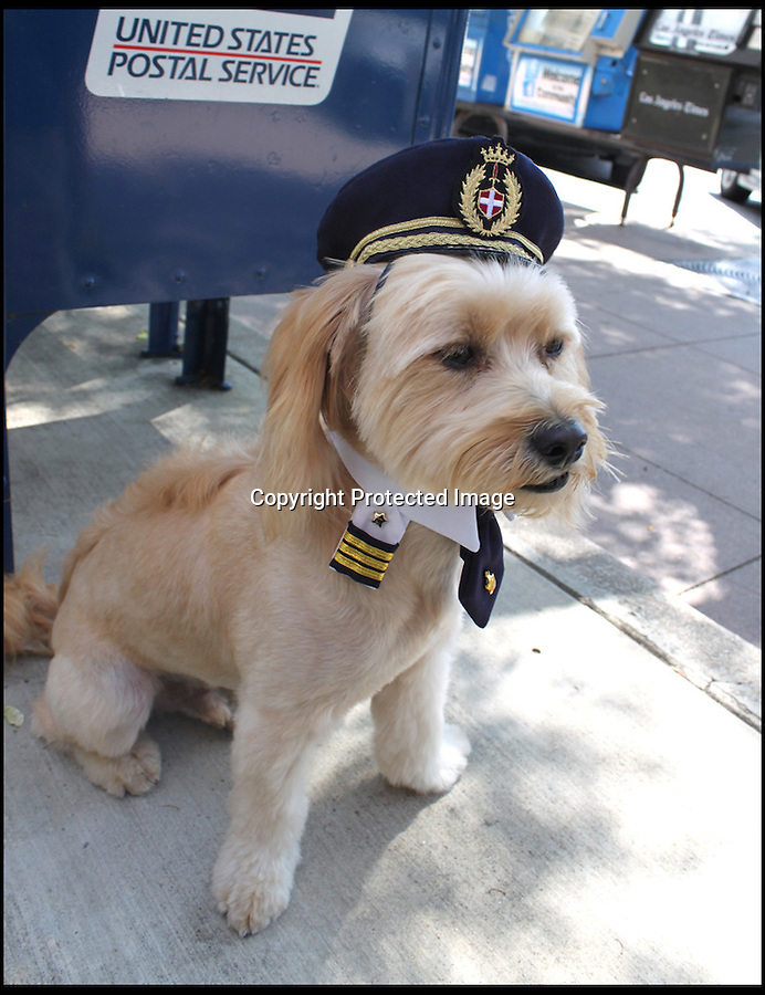 BNPS.co.uk (01202 558833)<br /> Pic: Cushzilla/BNPS<br /> <br /> ***Please use full byline***<br /> <br /> Captains uniform.<br /> <br /> A barking-mad designer has launched a range of wigs that turn pets into pop princesses including Katy Perry, Lady Gaga, Britney Spears and even Dolly Parton.<br /> <br /> Dogs and cats can also be dressed up as dragons, pilots, wizards or Prince Charming thanks to Leah Workman's wacky creations.<br /> <br /> The 40-year-old from Los Angeles spotted the trend of dressing up pets while studying in Japan - and later teamed up with husband Hiroshi Hibino to launch company Cushzilla.<br /> <br /> The pair instantly set tails wagging around the internet with their bonkers brand of pet fashion, which also features Sharon Osbourne and Sid Vicious wigs and cow and tiger costumes.<br /> <br /> Leah imports the high quality handmade wigs while costumes come from famous Japanese pet clothing designer Takako Iwasa.<br /> <br /> She says the most popular wig is the Lady Gaga, while the pilot's outfit tops the popularity charts in the costume department.<br /> <br /> Her own cats Jitters and Justus model many of the products on the company's website.