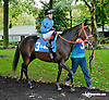 Thicket before The Justakiss Stakes at Delaware Park on 10/7/13