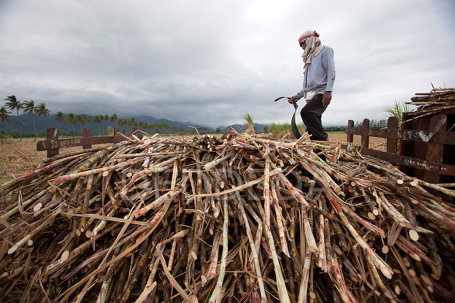 A man takes a brief rest as he harvests sugar cane near Bias City on Negros, Philippines.