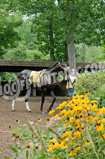 Special Skills before The Nick Shuk Memorial Stakes at Delaware Park on 8/4/12