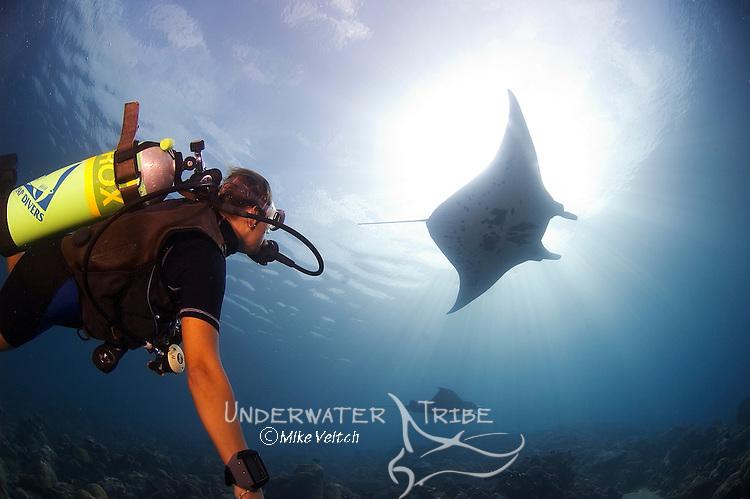 A diver watches Manta Rays, Manta birostris, Mi'il Channel, Yap, Micronesia, Pacific Ocean (MR)